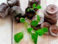 Особенности пересадки петуний из таблеток в горшки и в открытый грунт