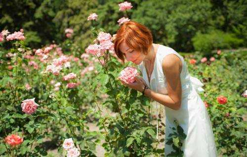 Выращивание роз в теплице: технология, на продажу. круглый год, уход, затеняющая ткань, на срез, методика