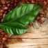 Самым полезным оказался чай... из листьев кофейного дерева