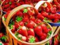 Выращивание клубники: выбор посадочного материала