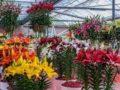 Домашняя лилия посадка и уход за цветком королей