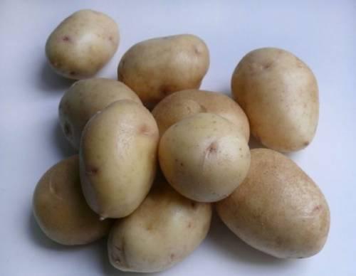 Семенной картофель условия хранение
