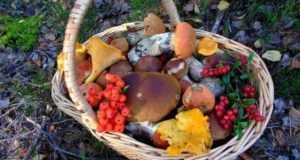 Сколько полезных грибов можно употреблять: шампиньонов, подберёзовиков