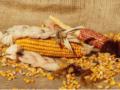 Как и где хранить кукурузу зимой, консервация