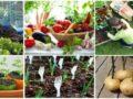 Хитрости бывалых дачников и секреты высокого урожая