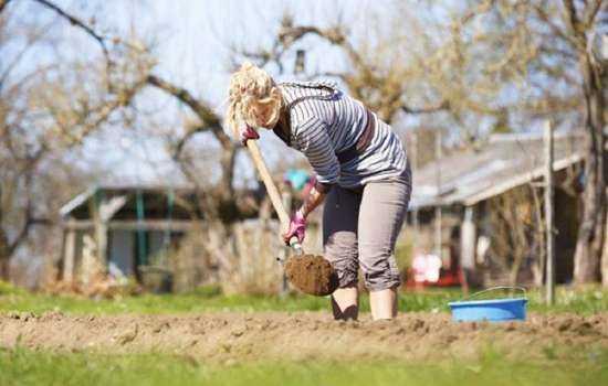 К чему снятся грядки, урожай на грядках, копать или рыхлить грядки?