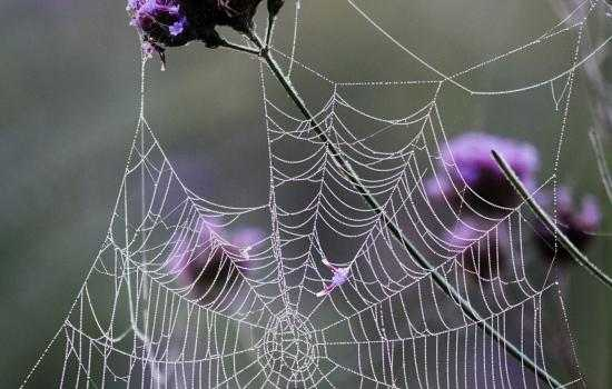 К чему снится паутина: в доме, на улице, запутаться в паутине?