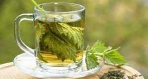 Чай из крапивы: польза для организма