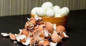 Применение яичной скорлупы на огороде