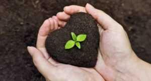 Как эффективно вывести грибок на почве