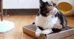 Самодельная когтеточка для кошек